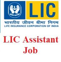 LIC Assistant Job